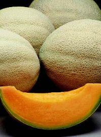 Athena Hybrid Cantaloupe