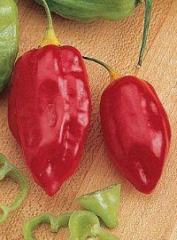 Caribbean Hot Pepper