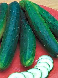 Burpless Cucumber