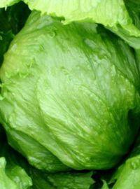 Iceberg Head Lettuce - Summertime