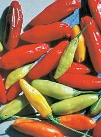 Tabasco Hot Pepper
