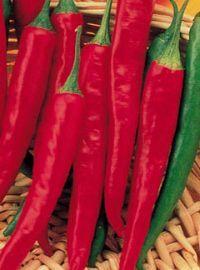 Super Chili Hot Pepper