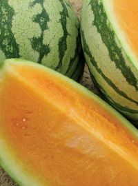 Orange Seedless Watermelon