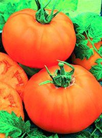 Chef's Choice Tomato