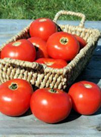 Mountain Fresh Tomato