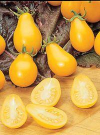 Yellow Pear Heirloom Tomato