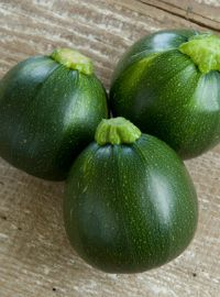 Eight Ball Zucchini Squash
