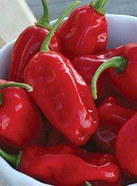 Zavory Hot Pepper